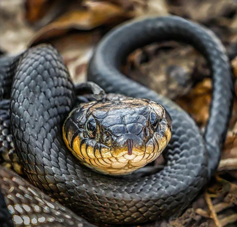 Посмотреть картинки змей