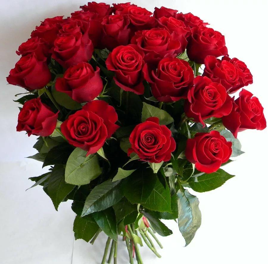 Открытка с розой с днем рождения, картинки стенку
