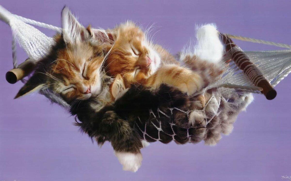 Картинки, спокойной ночи картинки с кошками