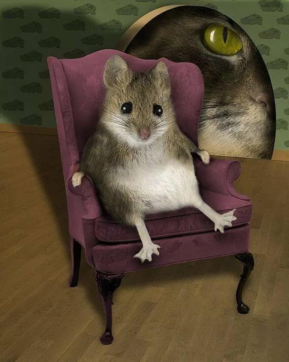 Картинка с мышкой прикол, день рождения