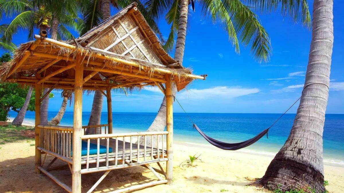 Картинки пляжные пальмами