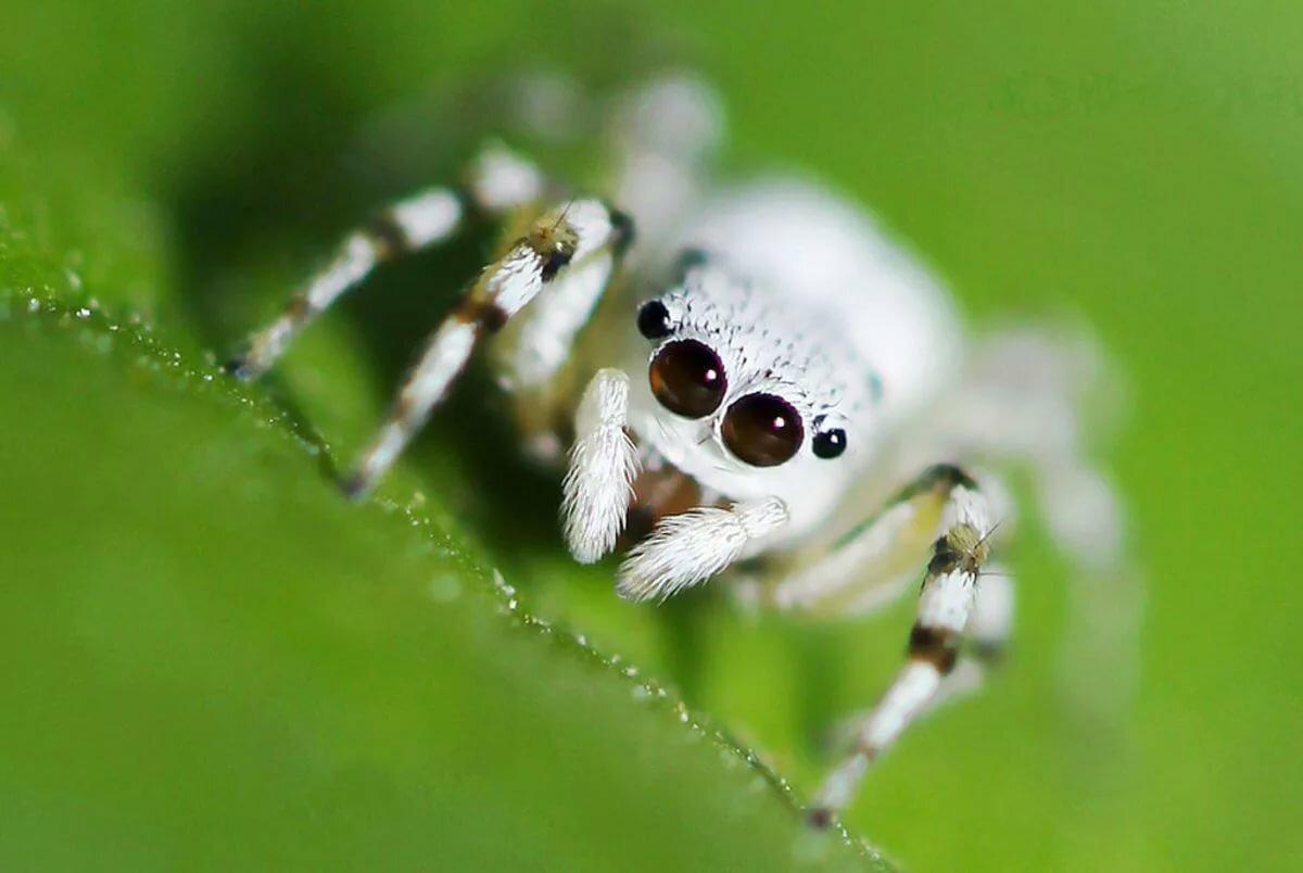 коридор картинки белого паука агаларов показал