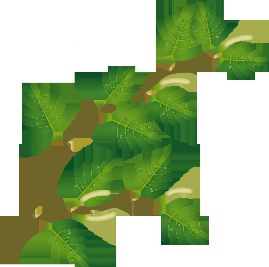 любите листья березы рисунки тех, кто никогда