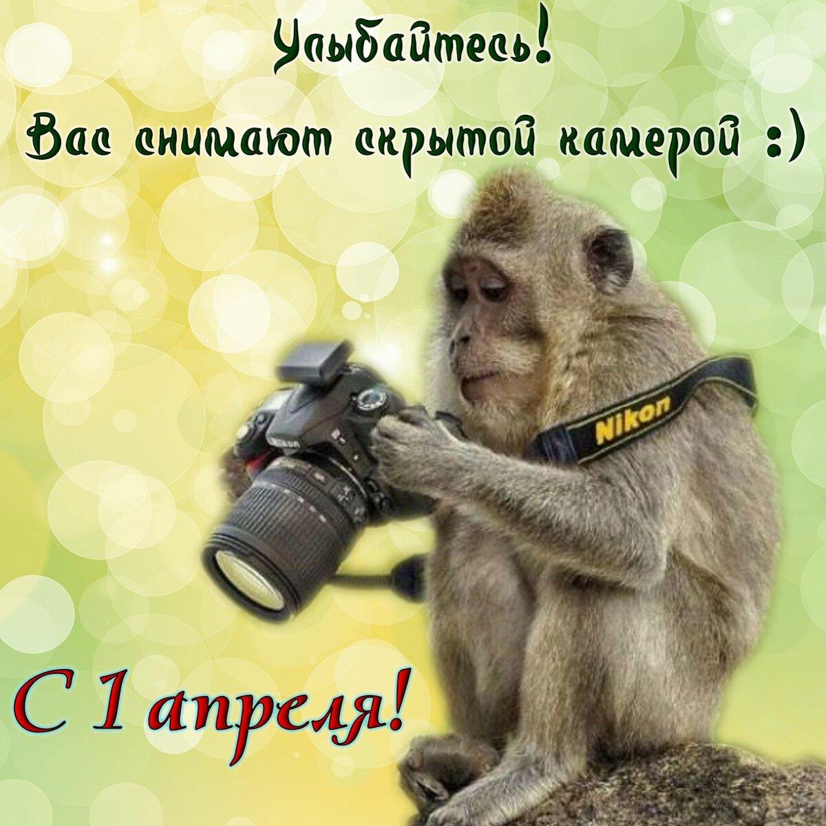 Картинки с обезьяной и поздравлениями