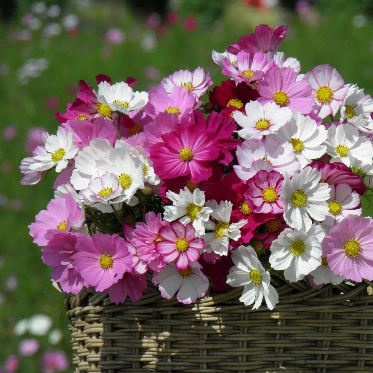 картинки с июльскими цветами способ украсить ребенка