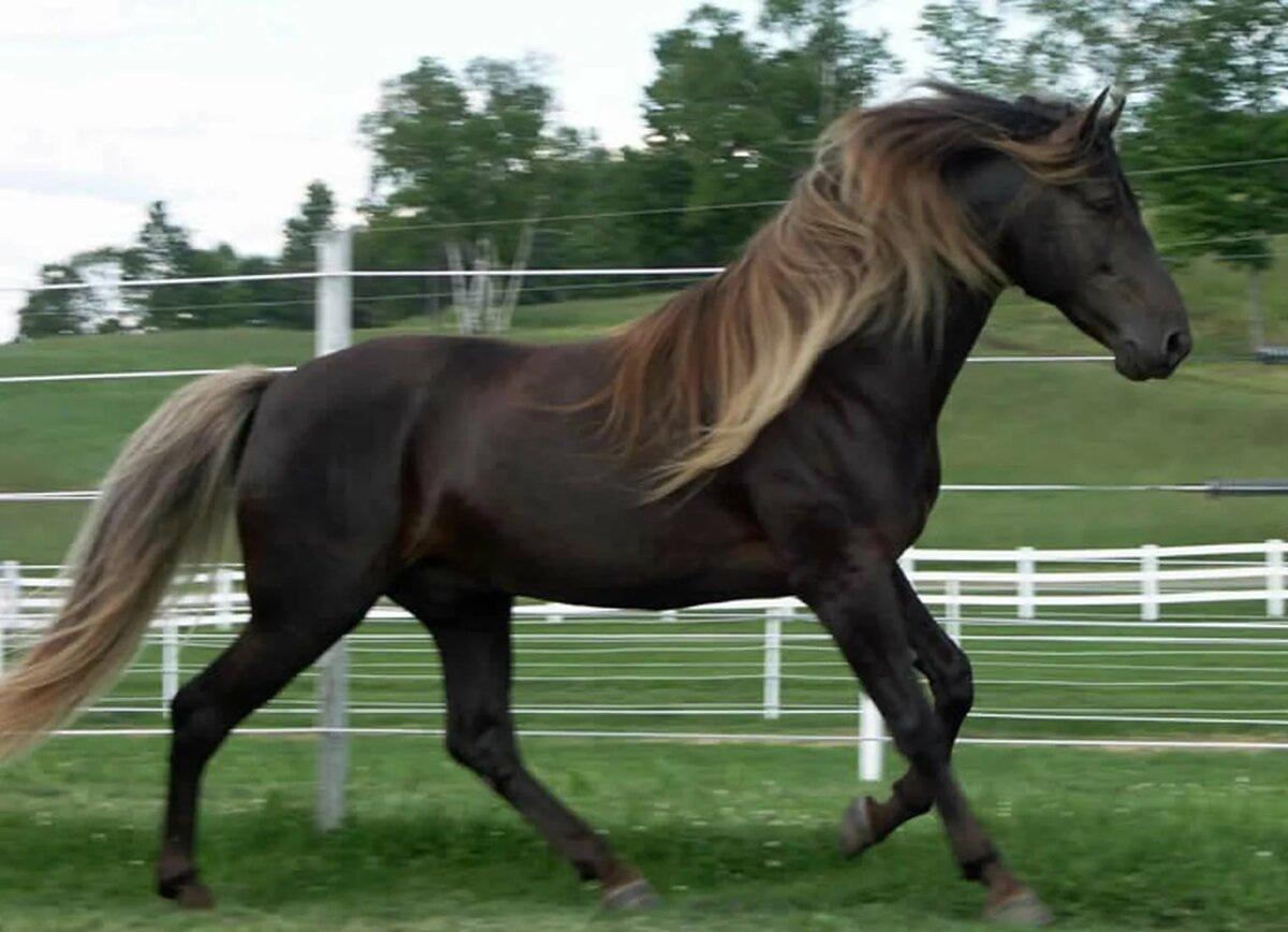 cool horse names - HD1200×868