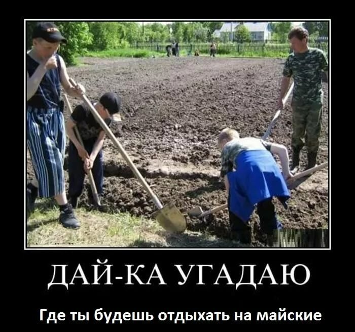 Прикольная картинка копать картошку, открытку сестре
