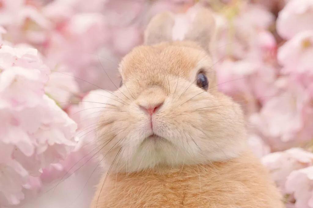 Кролики картинки нежные