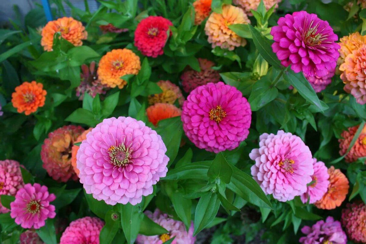 Купить однолетние цветы москва, букета петербурге