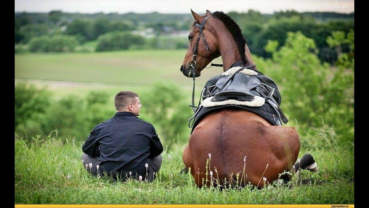 картинки про работу с лошадью приколы черное
