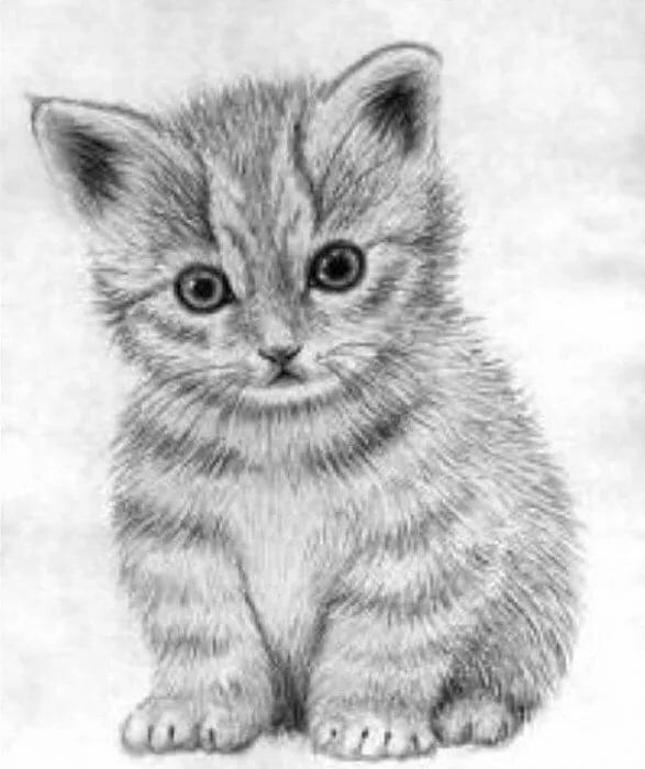 Рисунок маленьких котят