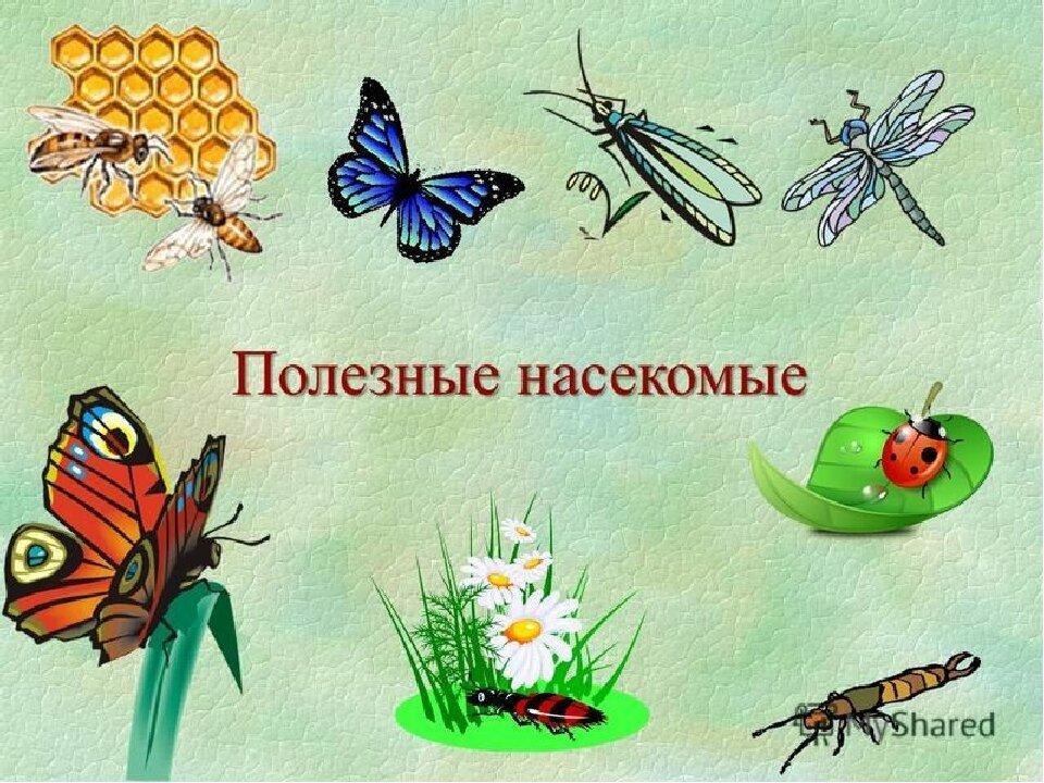 жакеты вредные и полезные насекомые с картинками собрать