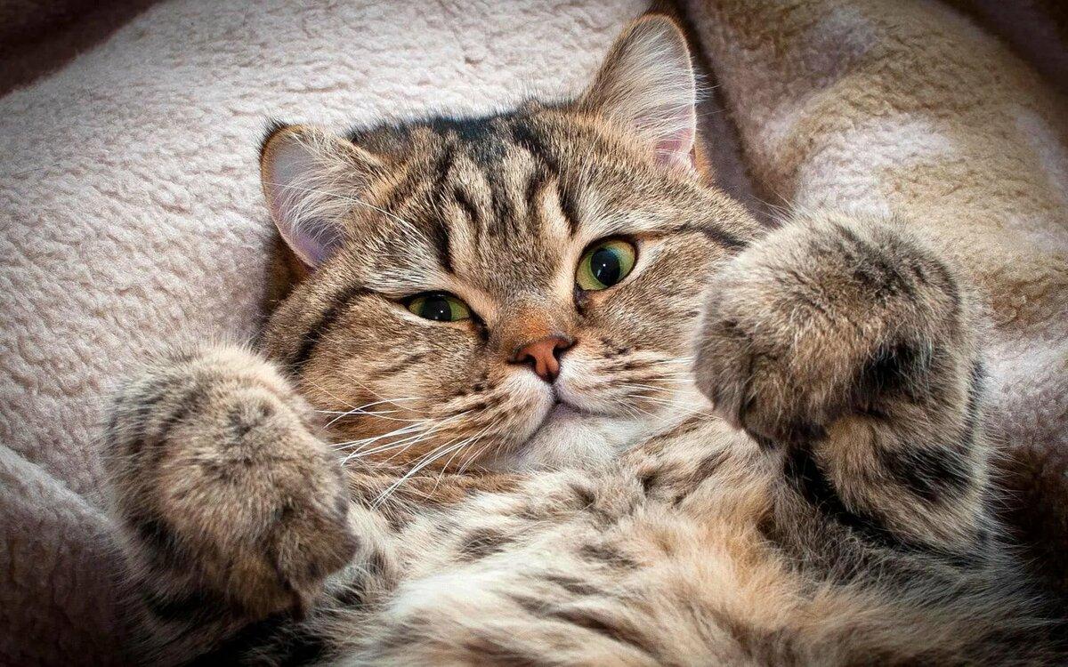 Котенок смешной картинка