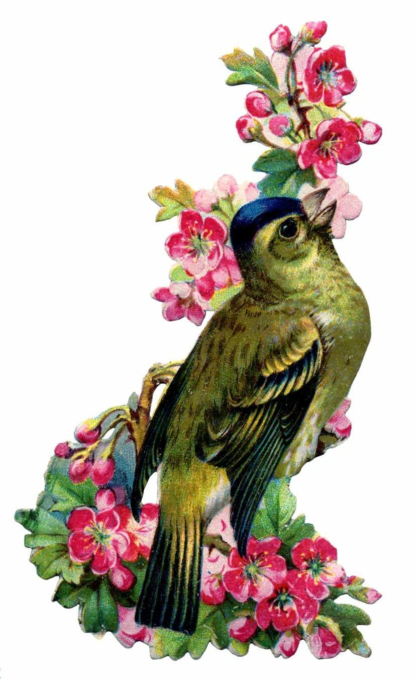 Ребенком, открытка с птицами и с цветами
