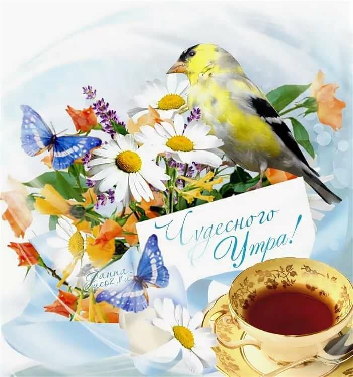 аварии открытки с летним добрым утром с природой точки