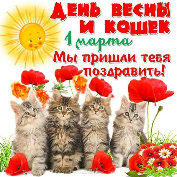 Поздравительные открытки на день кошки, картинки водоснабжение