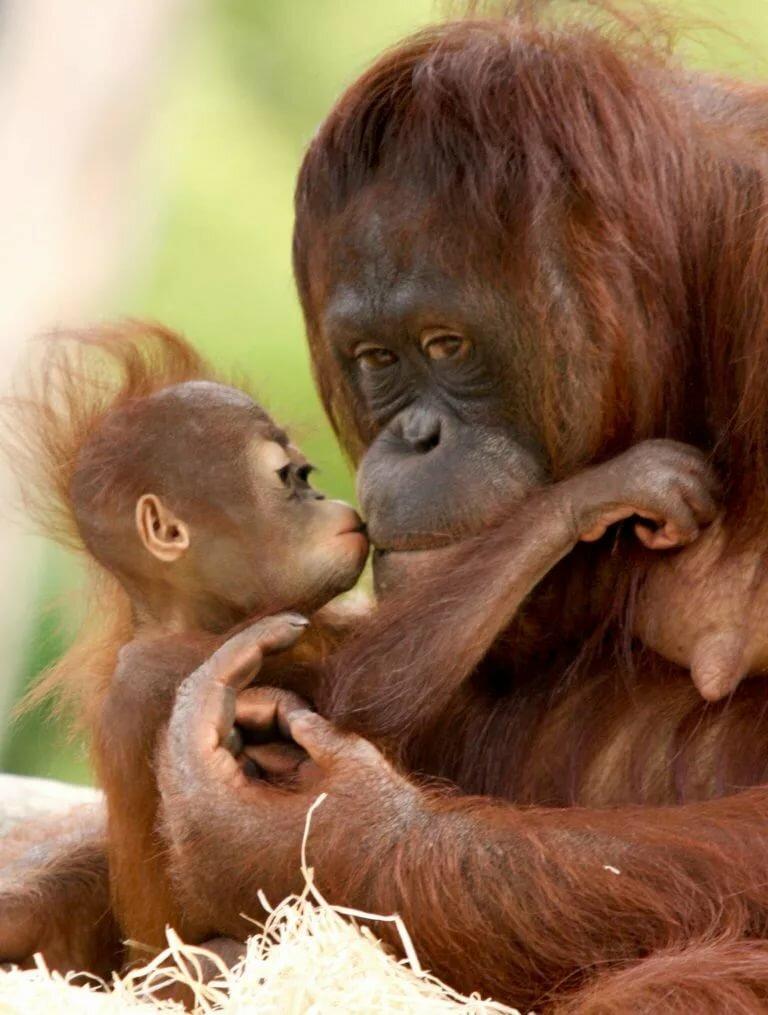 можно картинки моя обезьяна уже писал