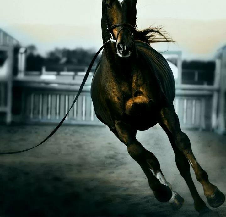 картинки с лошадью на аву работа