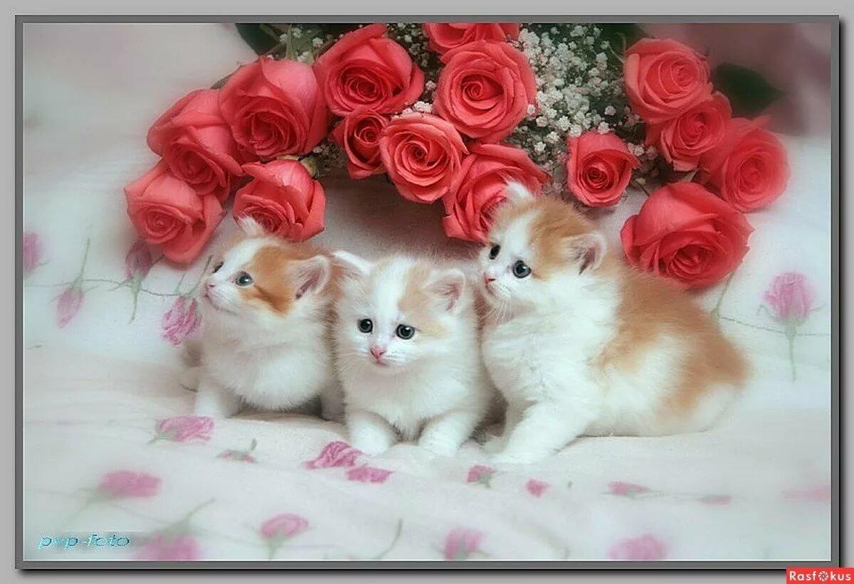 Для мам, открытка для самой красивой девушки с котятами