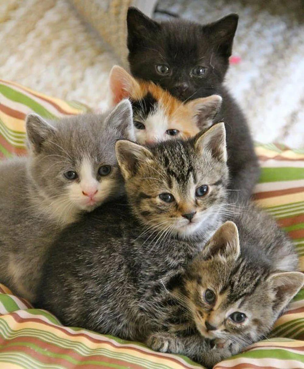 подобрали картинки пять котят и одна кошка вас