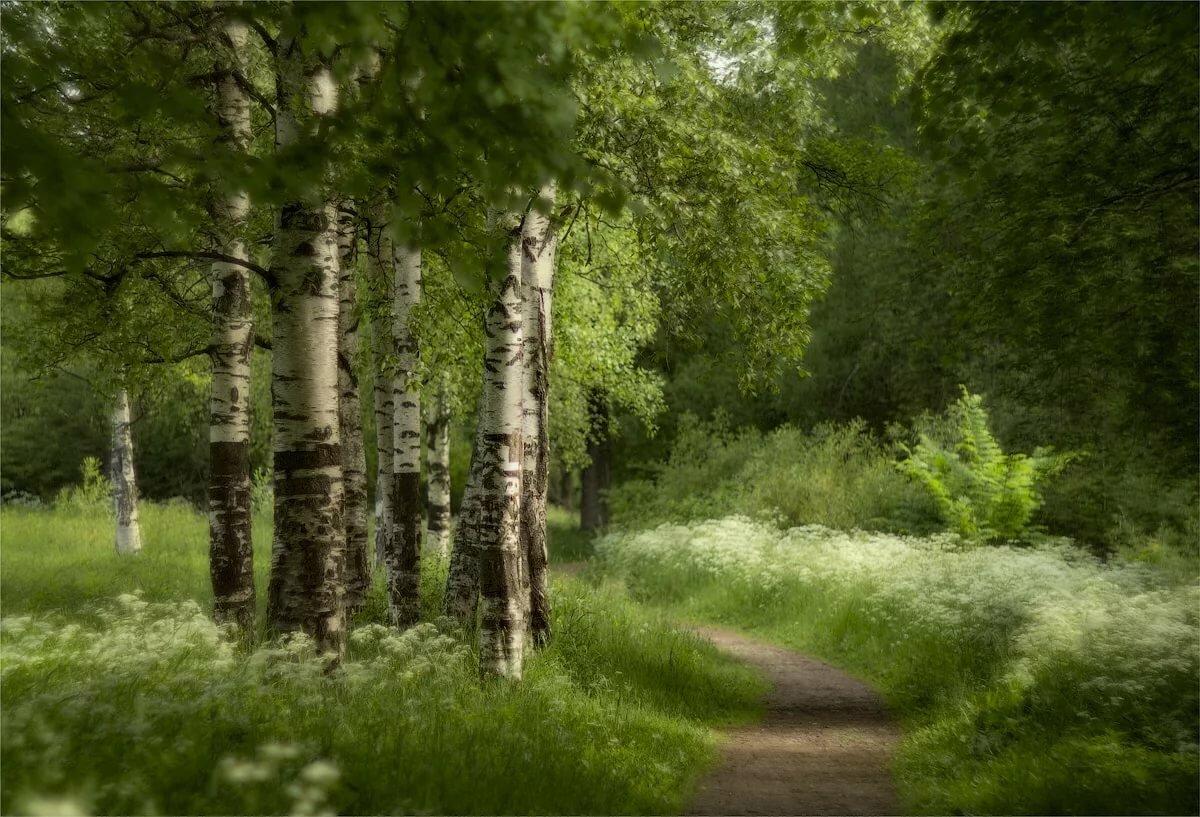 Картинки лето леса