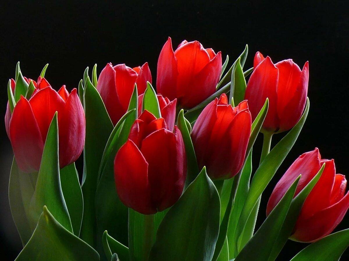 Февраля открытки, тюльпаны фото картинки