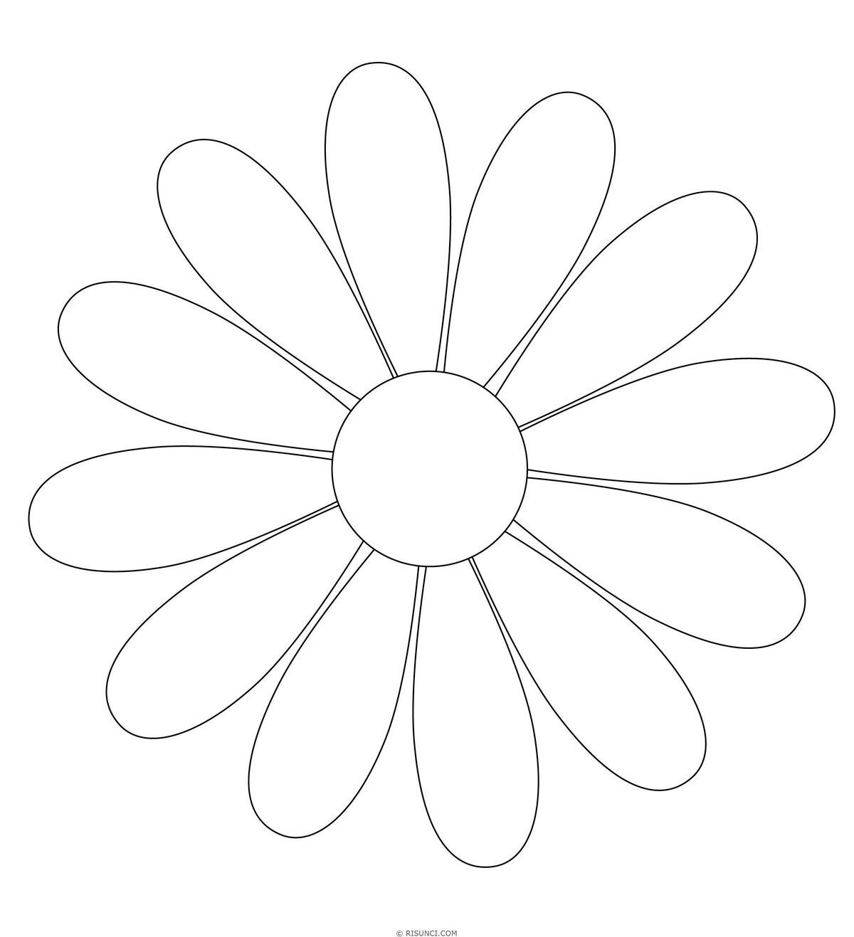 Картинки цветов колокольчик одуванчик мак ромашка плюсов