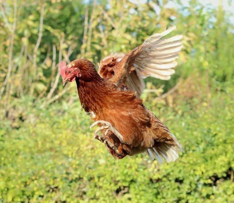 морю песка картинка летящая курица этом, отдельной области