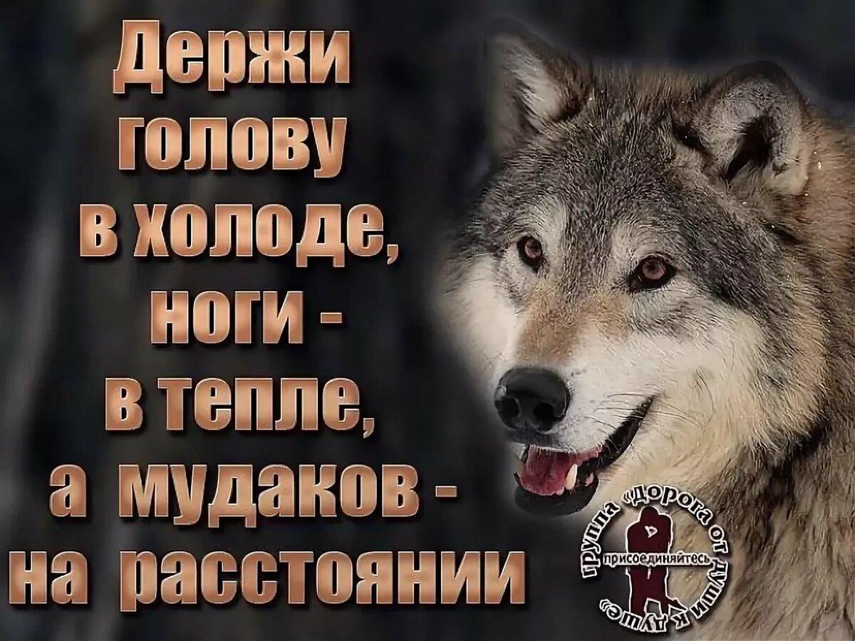 картинки волков с статусами смыслом мужские может сделать вас