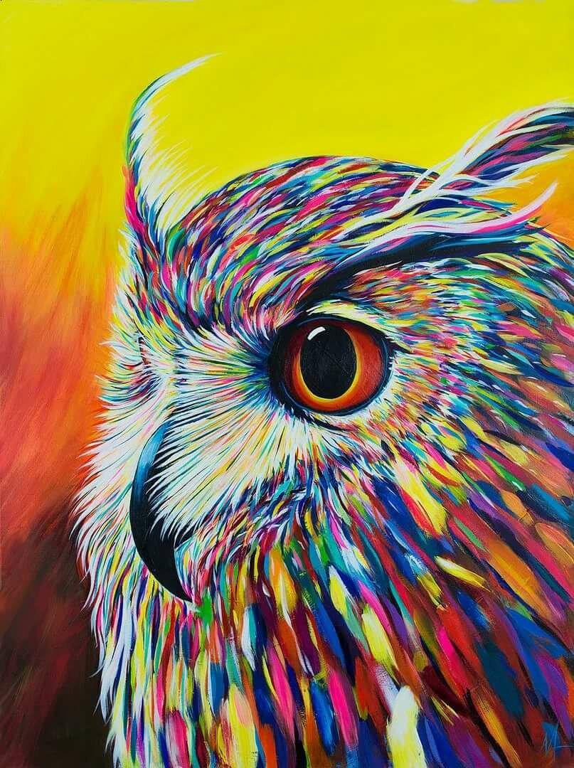 Цветные картинки совы