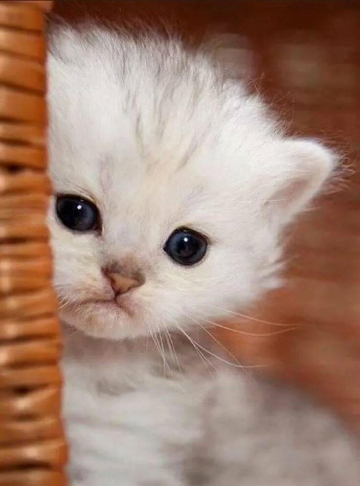 Прикол, картинки с котами скучаю