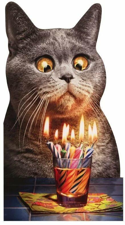 Цвергпинчером, картинки с котиками на день рождения