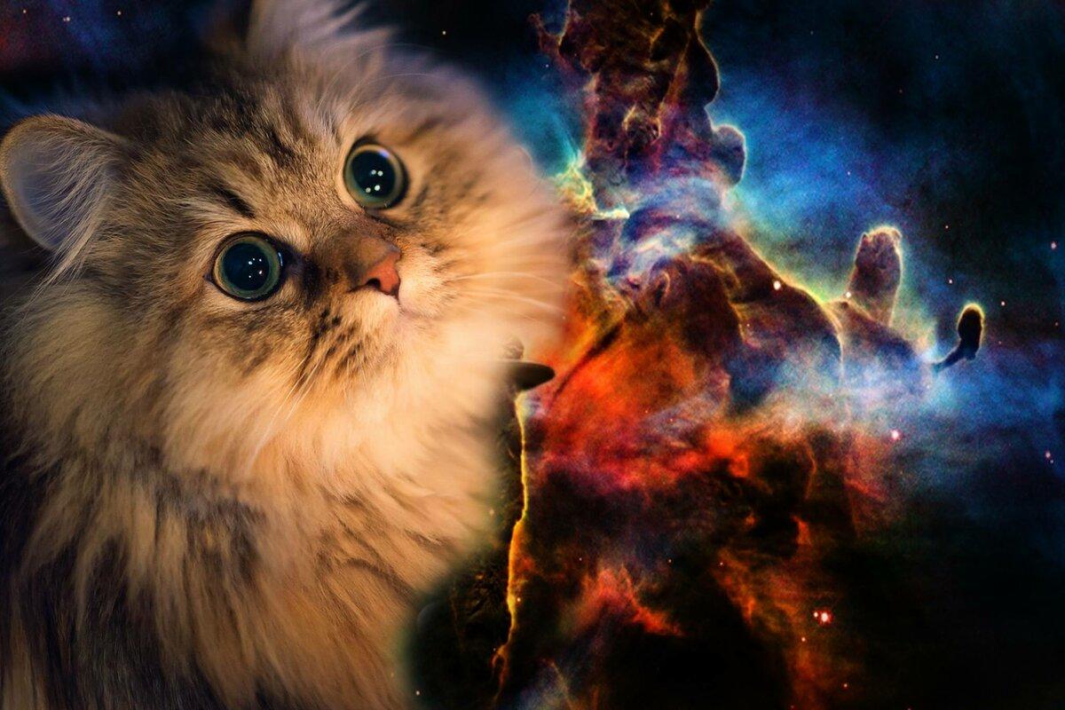 работы картинки на рабочий стол коты в космосе смешение