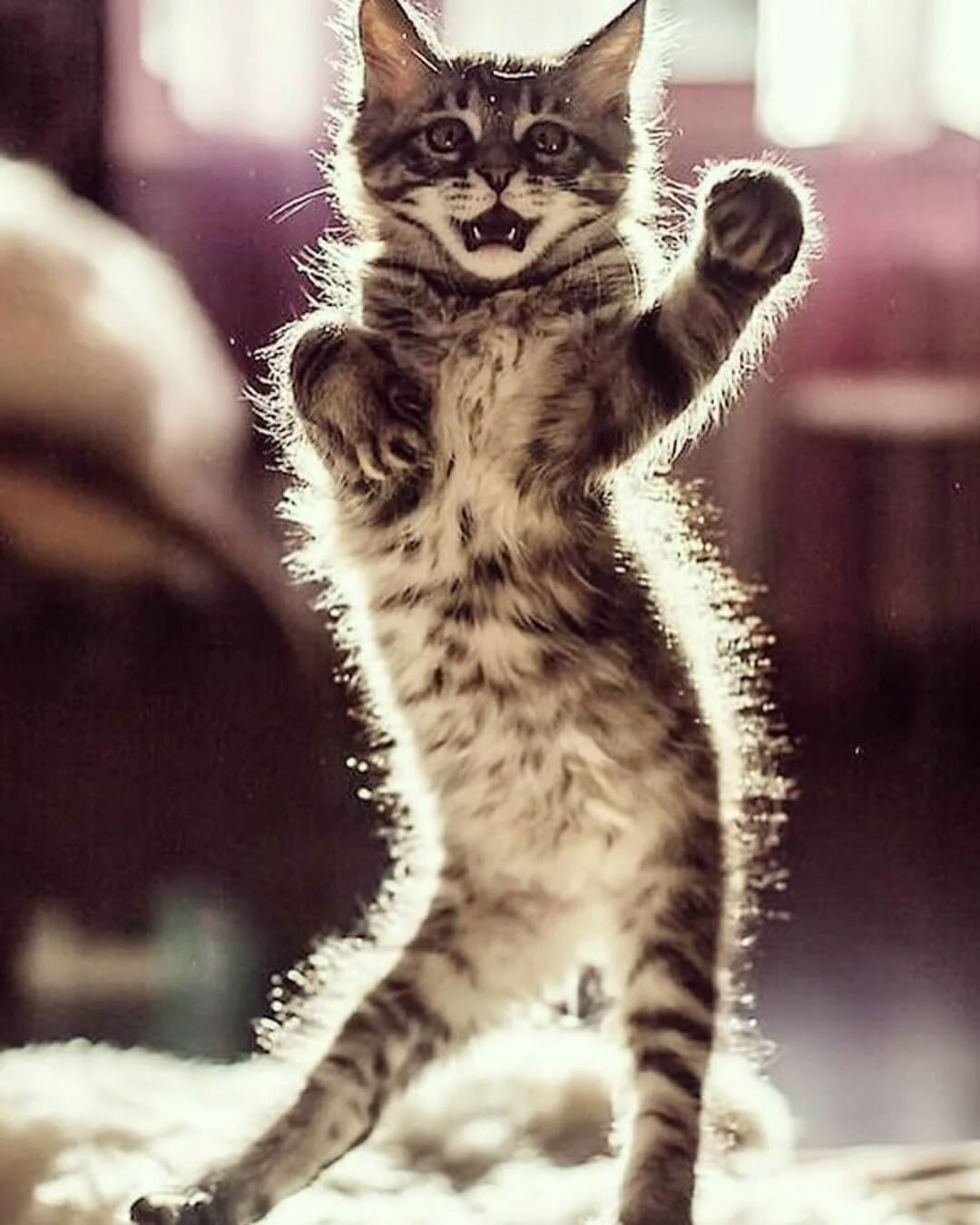Картинки кошек веселых