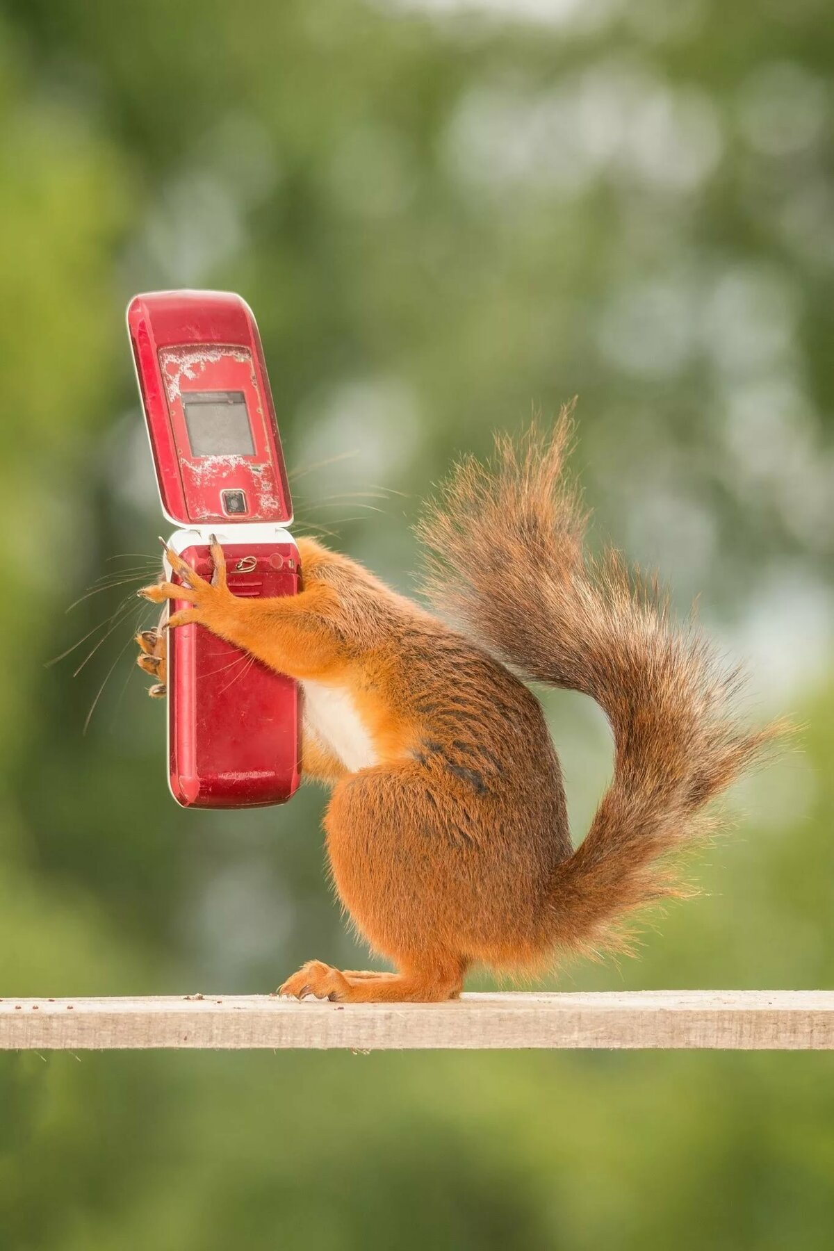 Смешные прикольные картинки для телефона
