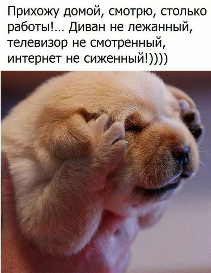 картинки в цитатах животных статье