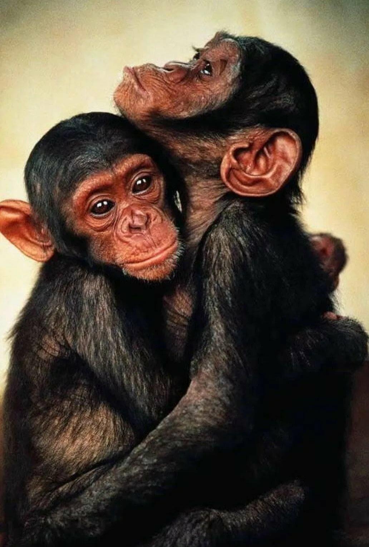 Картинки в обнимку с обезьяной
