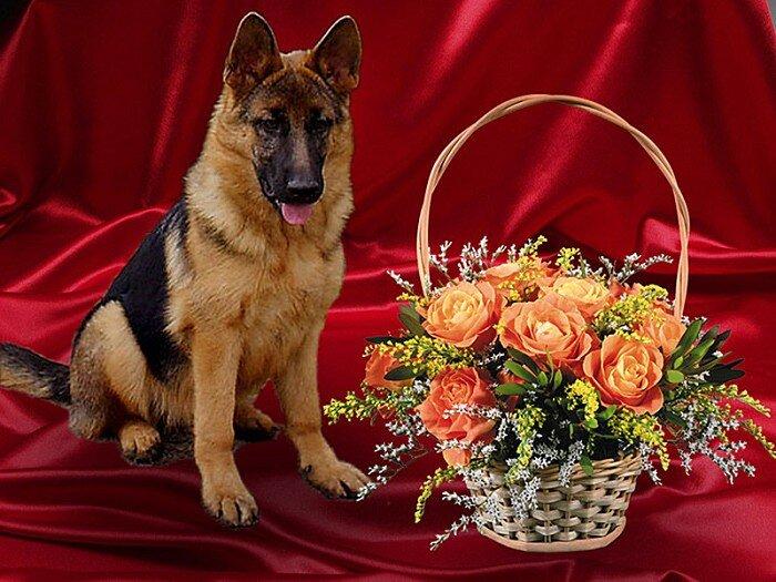 Готовых открыток, открытка с собакой поздравляю