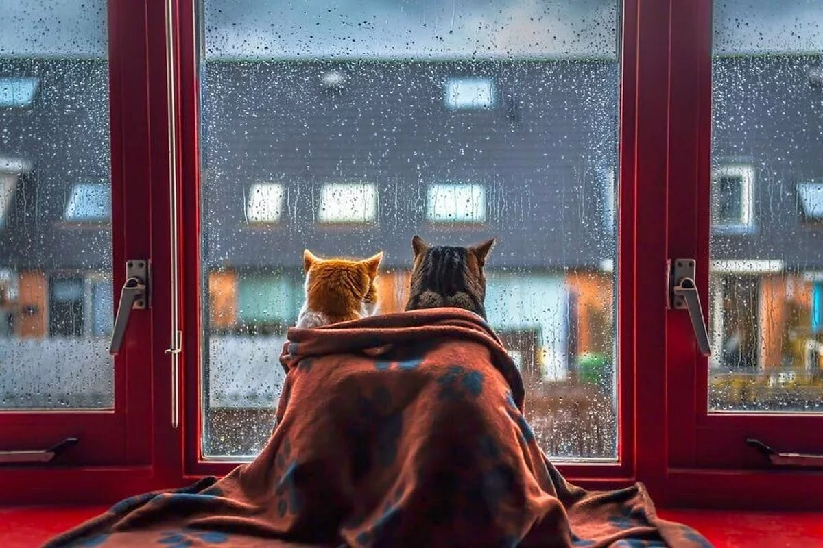 Картинки уютный вечер у окна