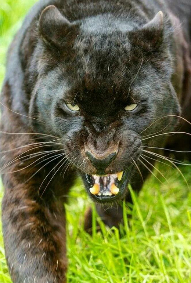 Злость животных фото