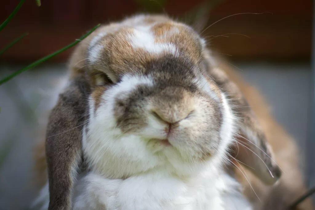 прикольные фото с зайчиками очень