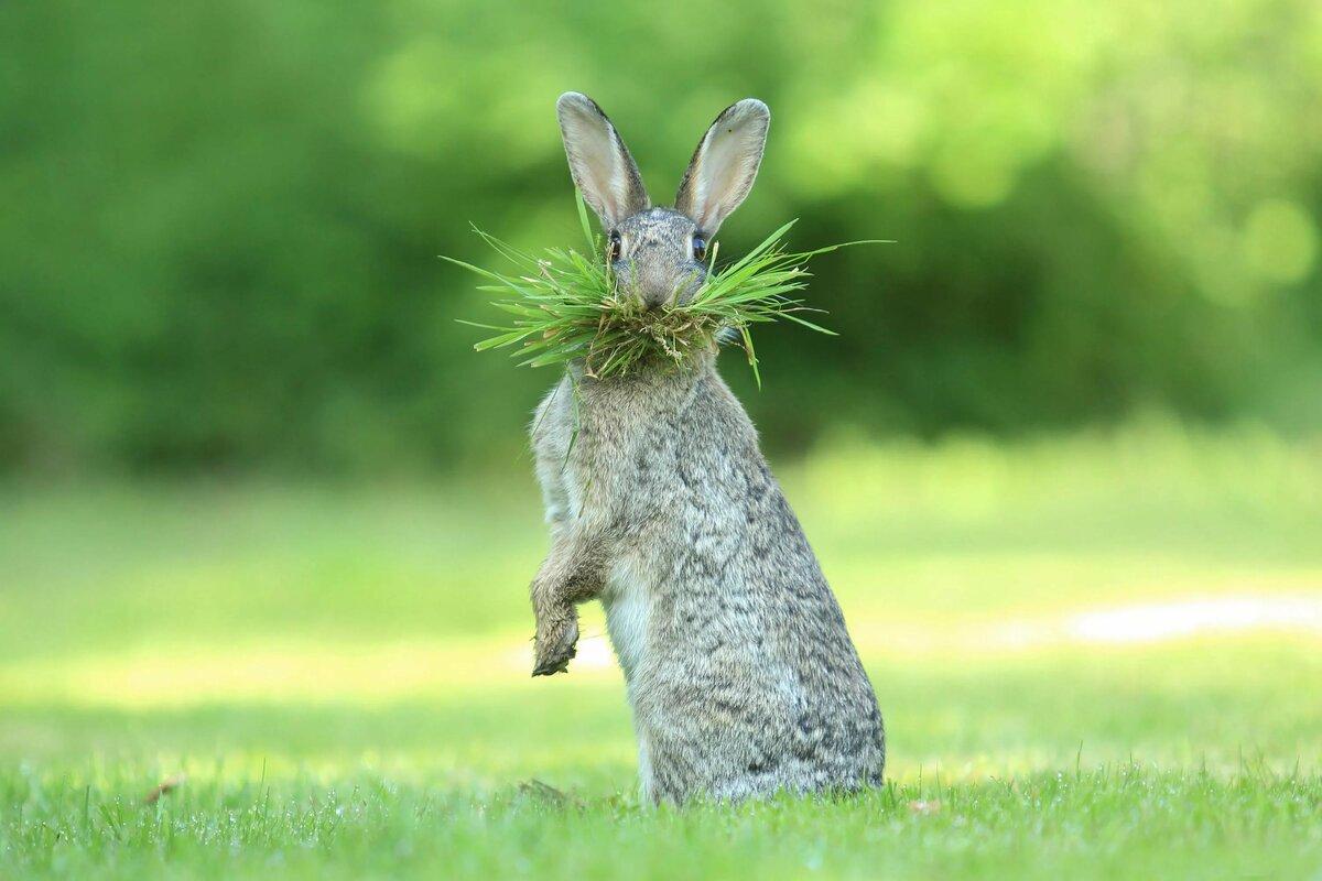 Забавные и смешные животные картинки, другу картинках