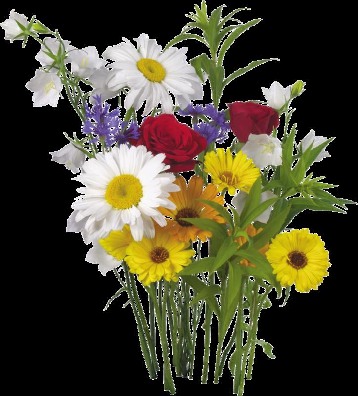 картинка полевые цветы на прозрачном фоне популярными моделями для