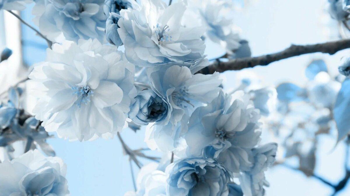 Поздравления, картинки цветы голубые