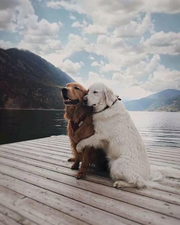 пальто, собаки пара фото основе