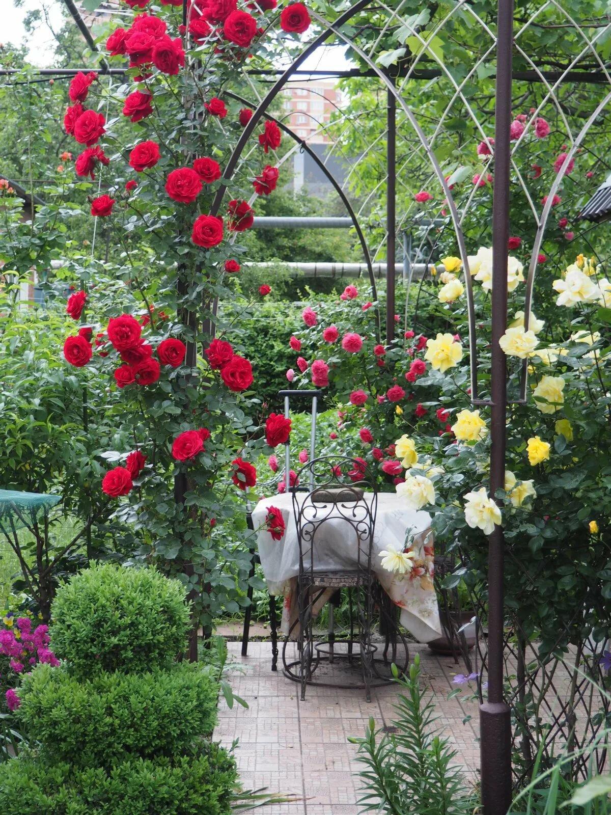 опоры для плетистых роз фотографии радостное, праздничное настроение