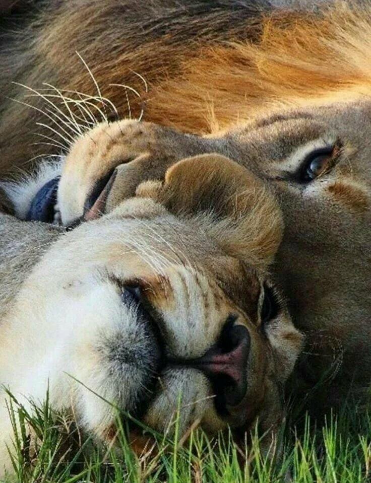 Картинки красивые про любовь и животных
