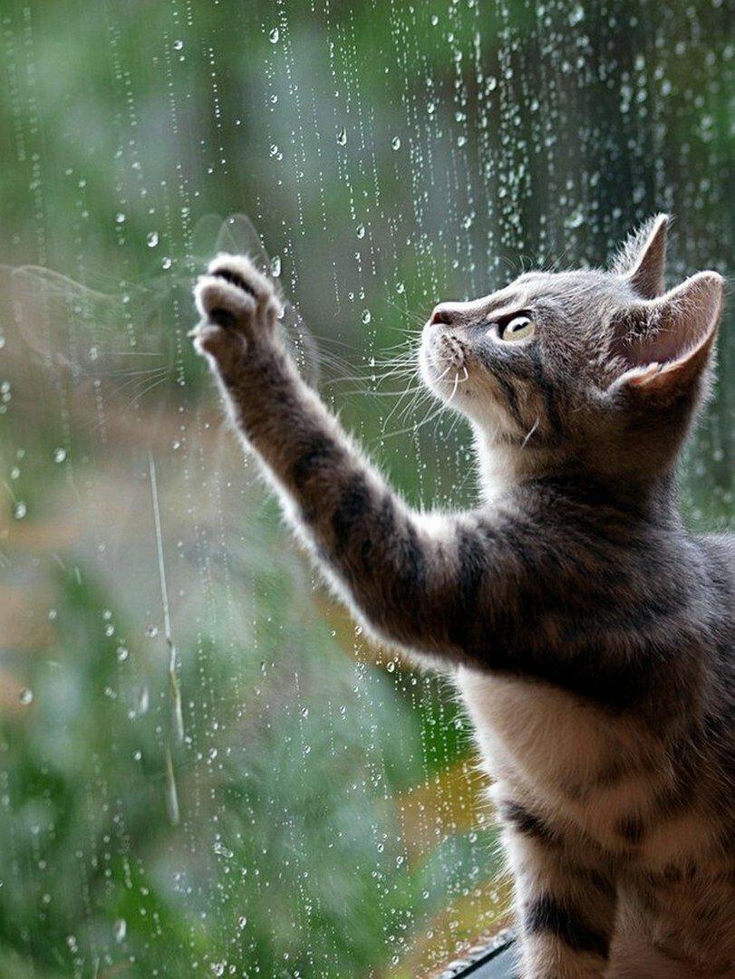 Картинки про дождь красивые с надписями, словарь