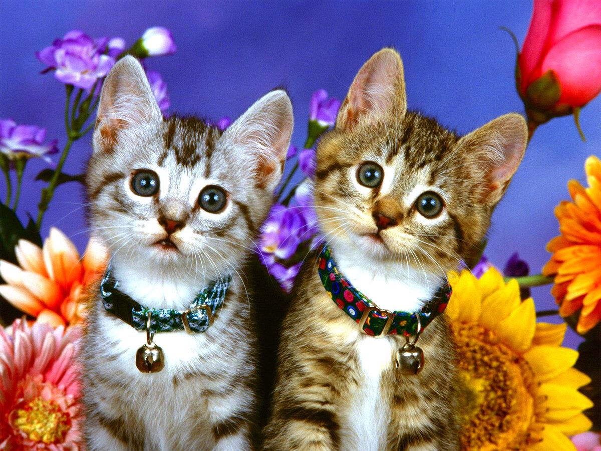 Надписью, самые красивые картинки с животными с кошками