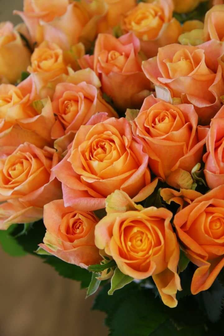 Картинки с морковным цветом розы или серебряные